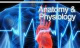 CMA AAMA Practice Exam Anatomy And Physiology Pictures